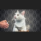 Meow Meow. Meow. Meow!